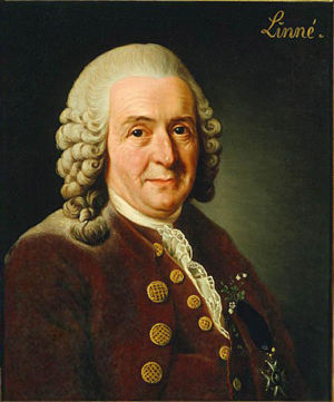 Linnaeus.